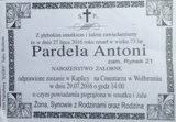 Pardela Antoni